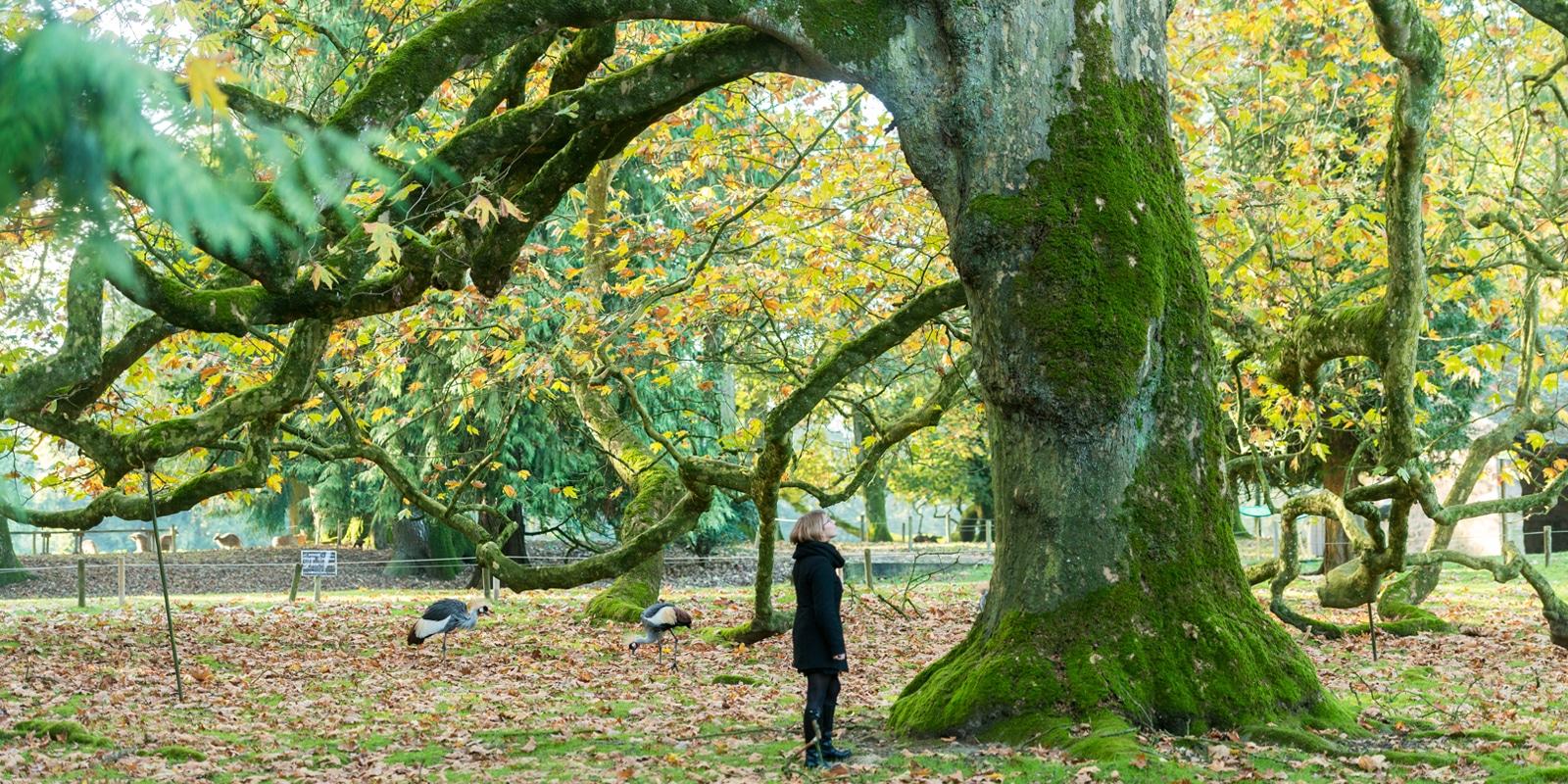 Curiosités et activités en Bretagne sud comme ici le Parc de Branféré copyright photo Emmanuel BERTHIER-Morbihan tourisme